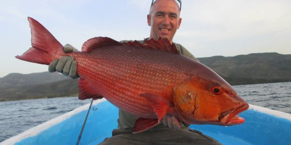 Red Snapper in Djibouti