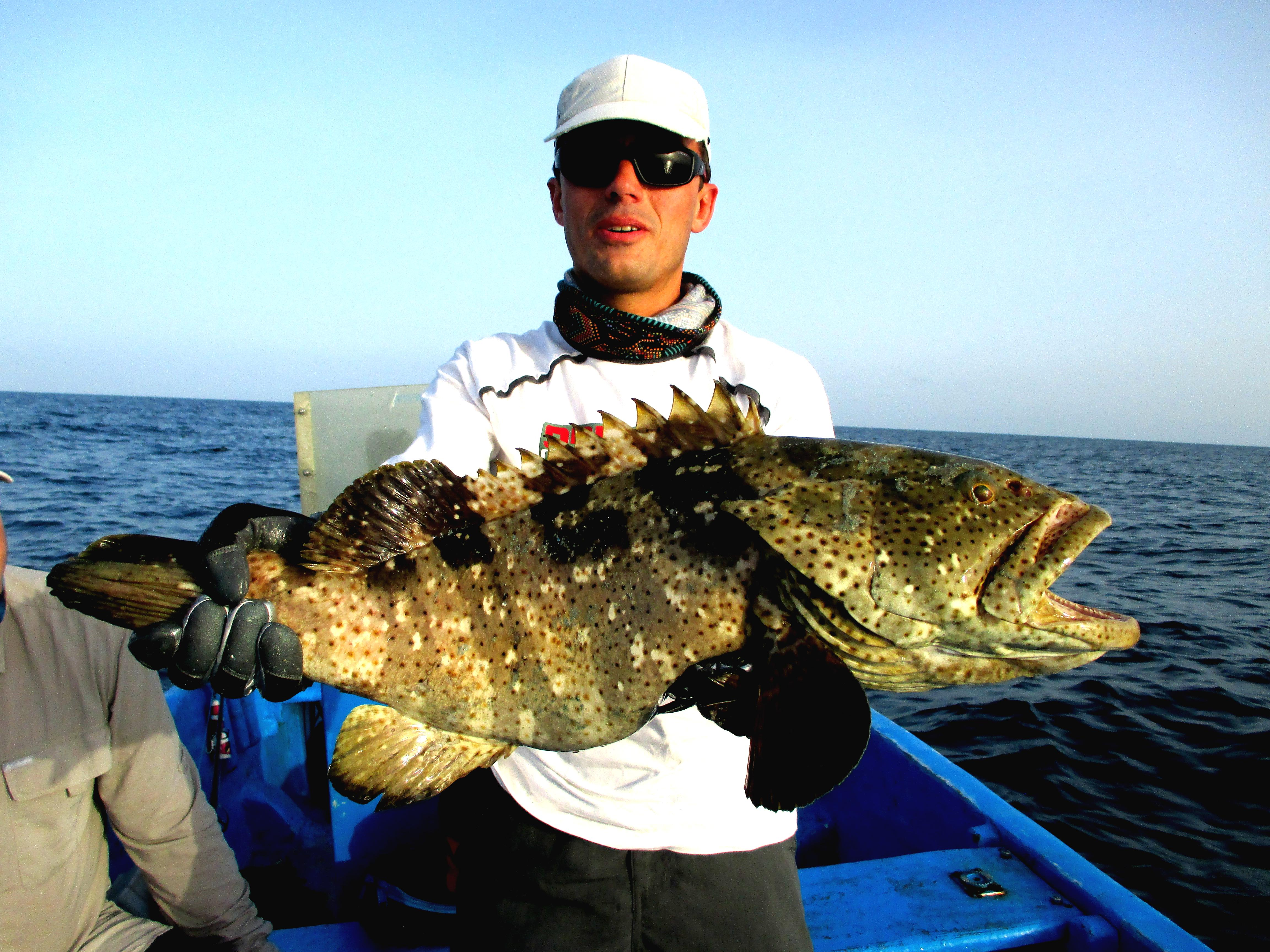 fish-grouper-djibouti